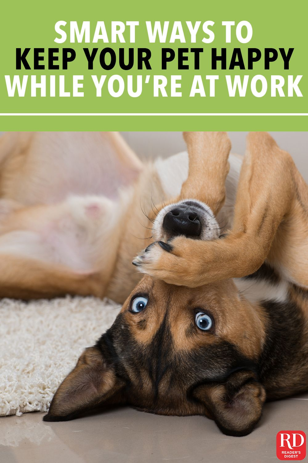 Smart Ways To Keep Your Pet Happy While You Re At Work All Day Pets Pet Calming Clever Dog