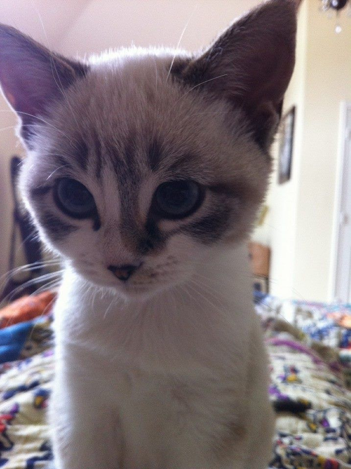 I M Tiny And New And Cuter Than You Kittens Cutest Cute Cats