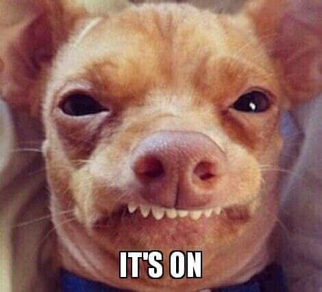 Oh Tuna You Re My Hero Animal Humour Chiweenie Cute Dogs