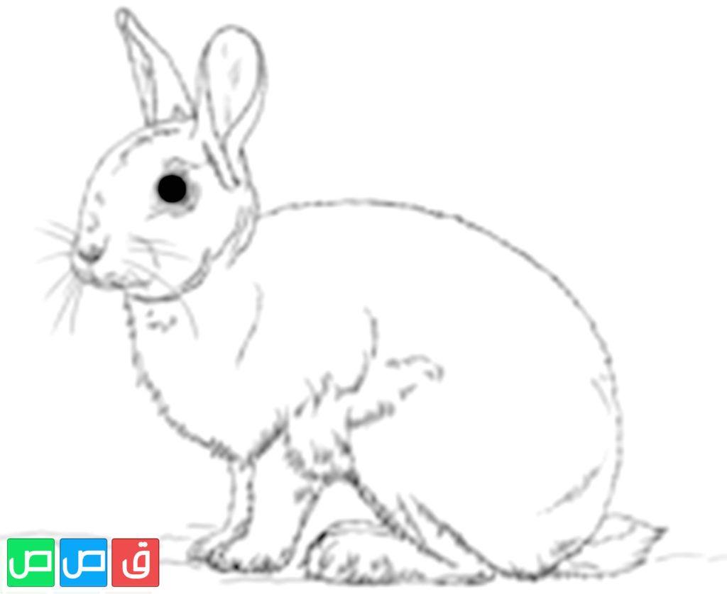 رسم ارنب للتلوين Rabbit Drawing Hello Kitty Drawing Drawing Tutorial