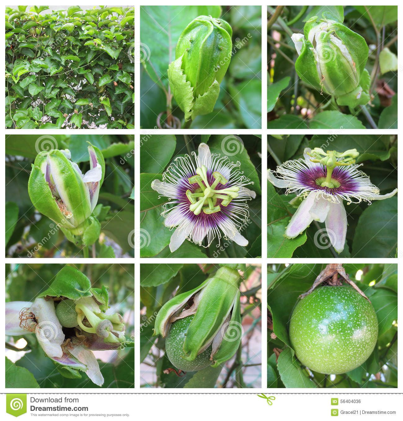 Passion Fruit Download From Over 48 Million High Quality Stock Photos Images Vectors Sign Up For Free Today Image 5640 Passion Fruit Fruits Images Fruit