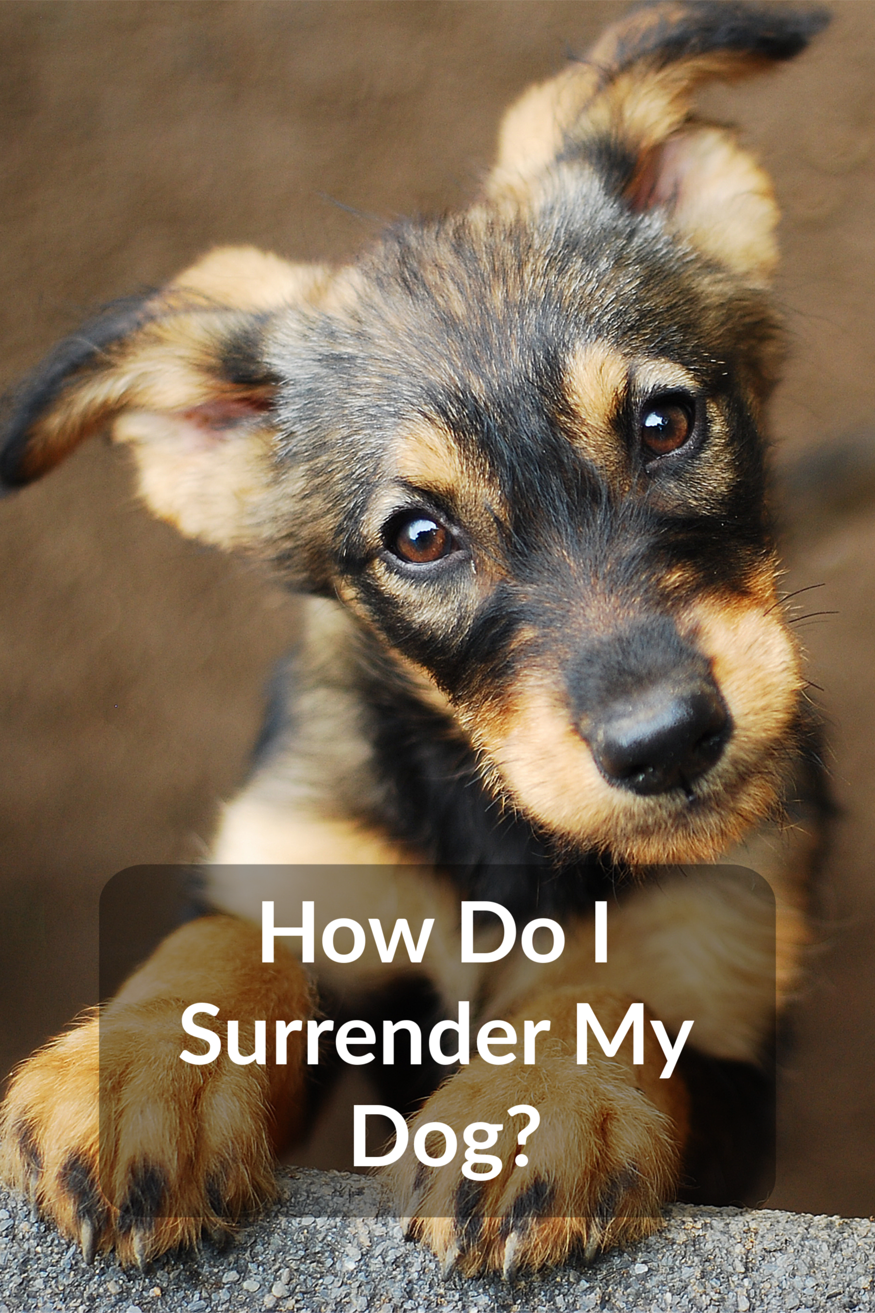How Do I Surrender My Dog Pets Dogs Animal Photo
