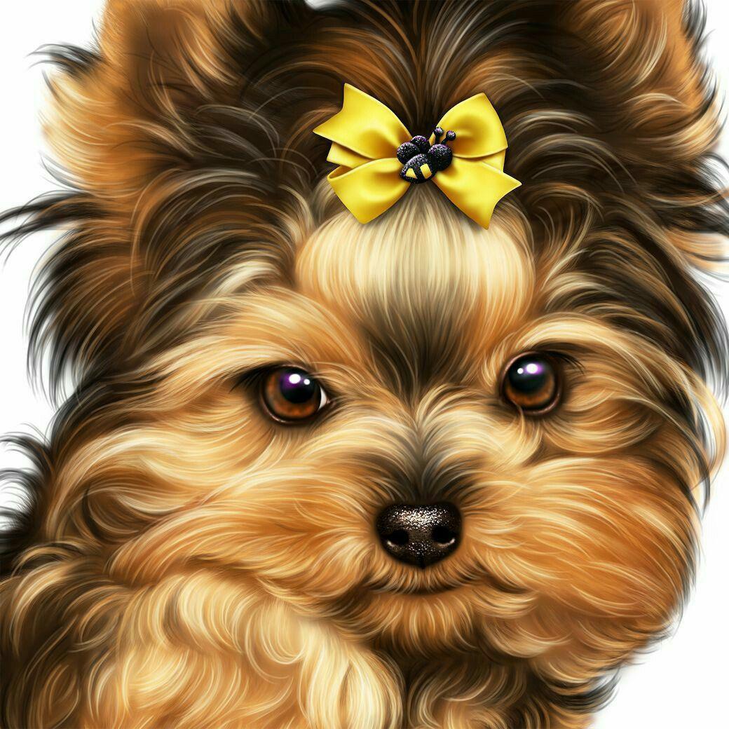 Pin By Alla Redko On Malyunki Jork Yorkie Dogs Yorkshire Terrier Yorkshire Terrier Dog