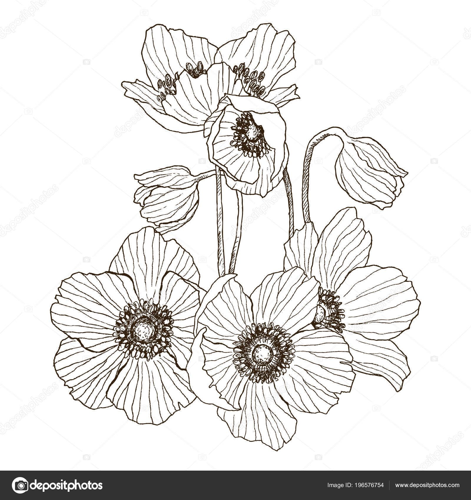 Vintage Anemone Flowers Wedding Flowers Bundle Can Use For Greeting Cards Wedding Invitations P In 2020 Floral Pattern Vector Flower Drawing Flower Bouquet Drawing
