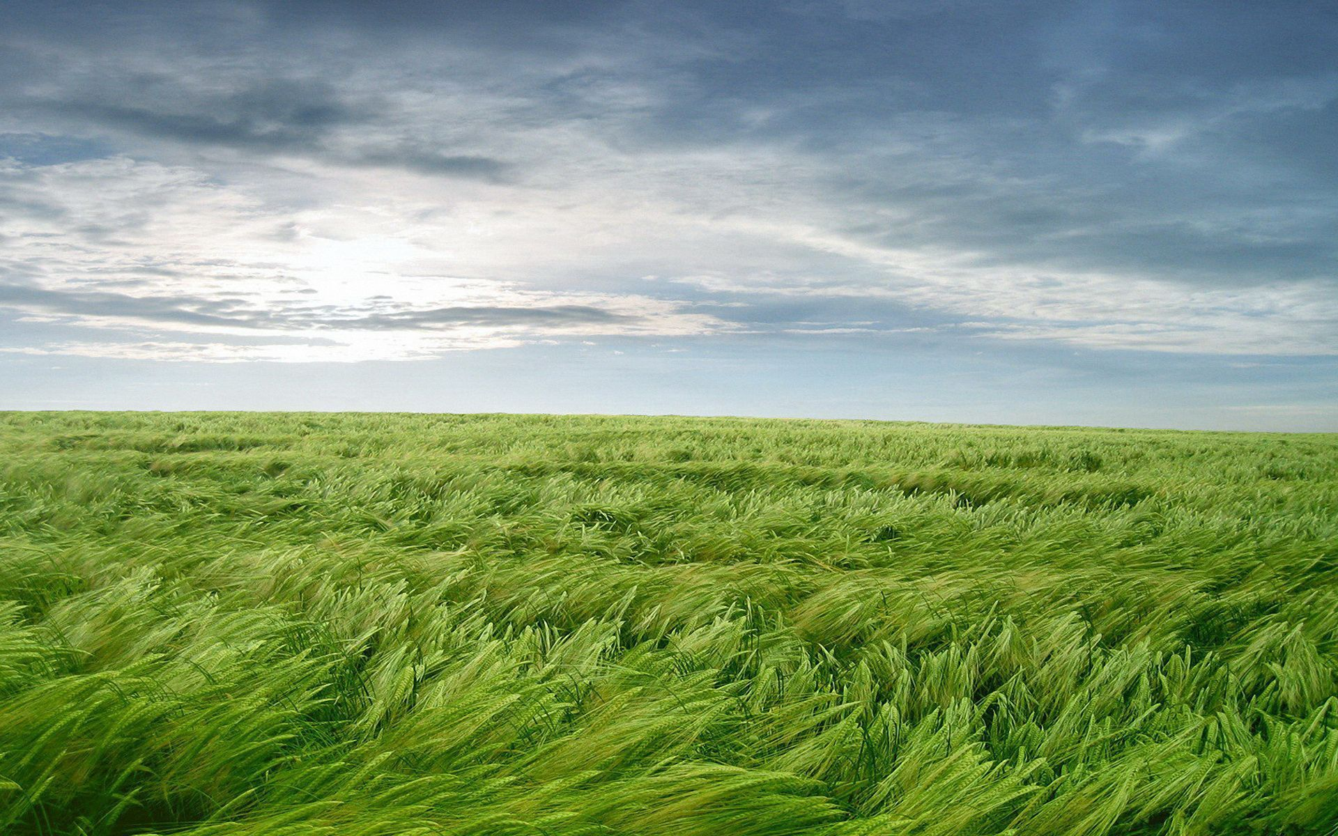 Wind Blowing Grass Wallpapersus Com Landscape Wallpaper Beautiful Nature Landscape Wallpaper grass field rainbow hill fog