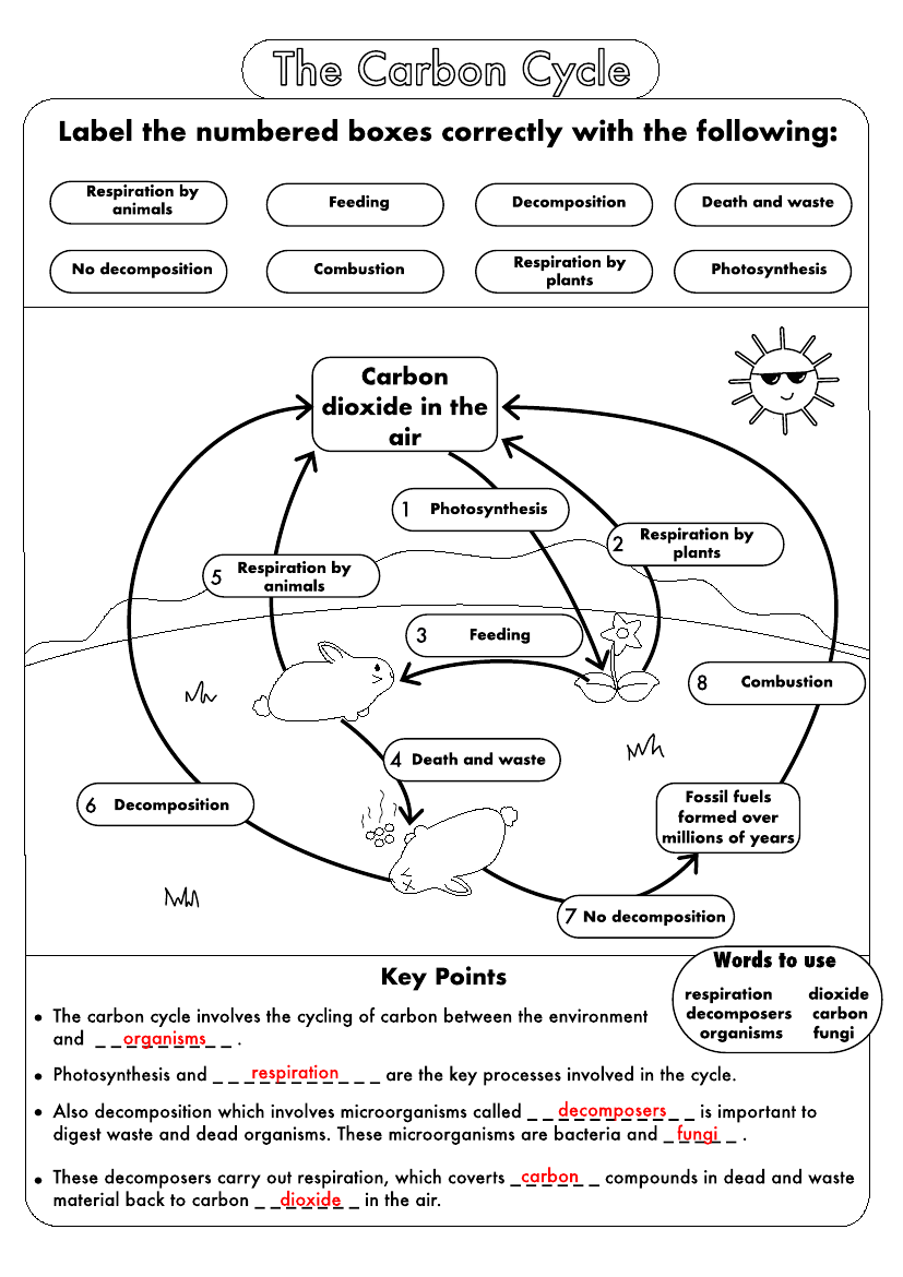 Gcse Biology Carbon Cycle Worksheets And A3 Wall Posters Updated Teaching Resources Biology Worksheet Carbon Cycle Gcse Science