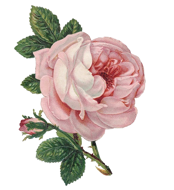 Madame Amour Transparent Flower For Your Tumblr Vintage Flowers Victorian Flowers Vintage Roses