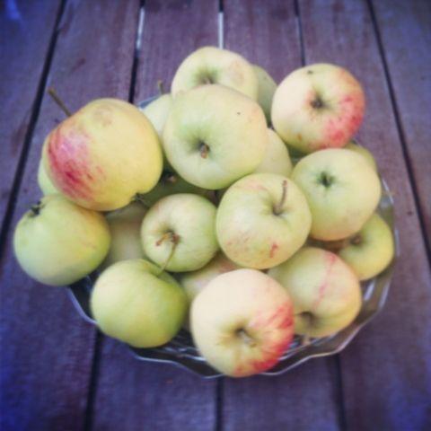 Omenasato talteen
