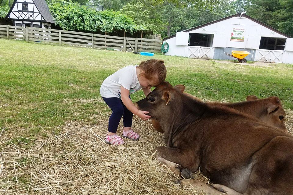 Petting Zoos Near NYC Where Kids Can See Farm Animals