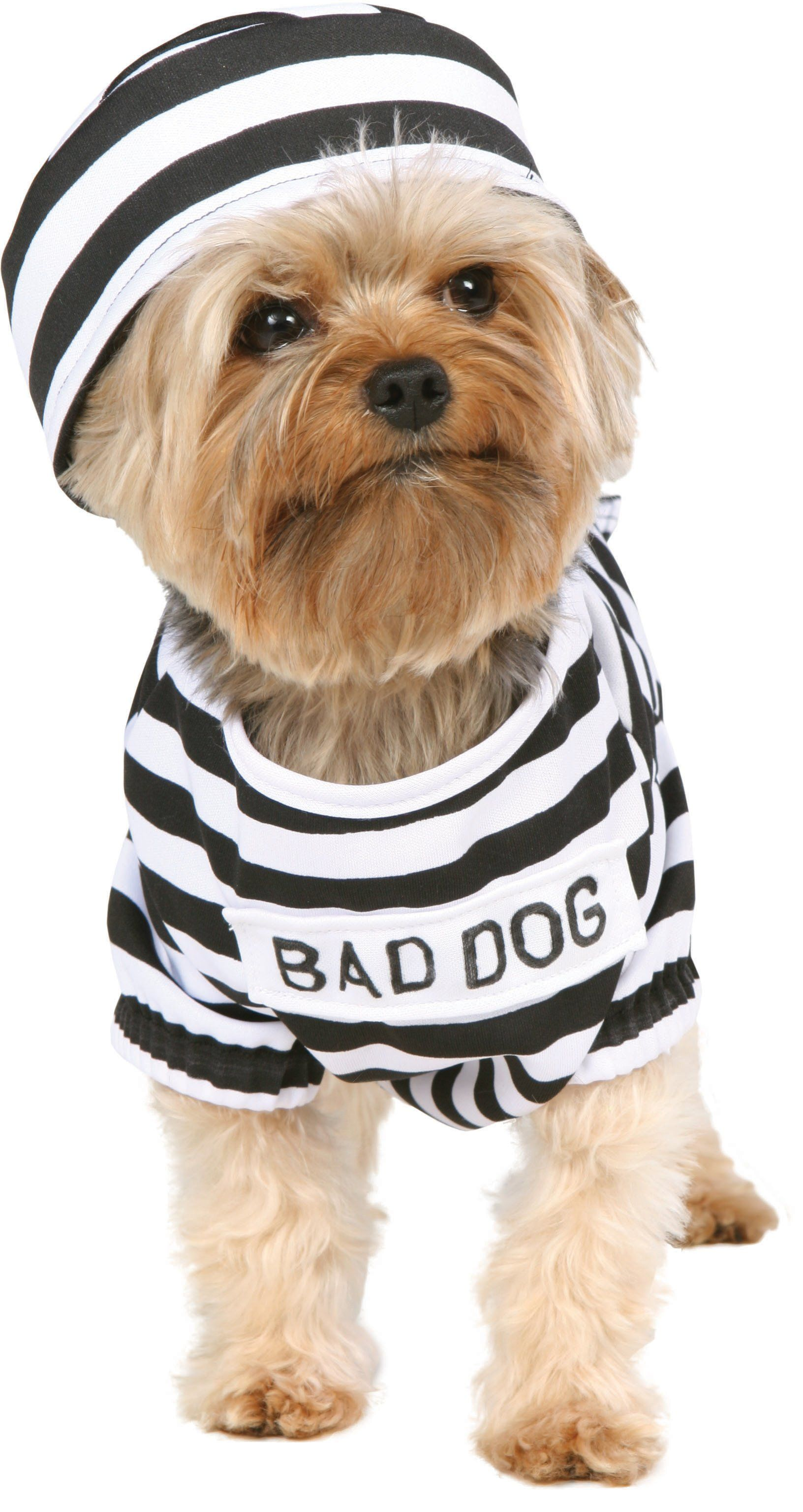 costumes for small dogs Dog Costumes (With images) Dog