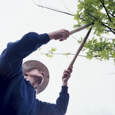Training A Wax Myrtle Into A Tree Mock Orange Tree Pruning Trees Shrubs