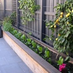 Raised garden bed on a narrow side yard good use of for Small narrow trees for gardens