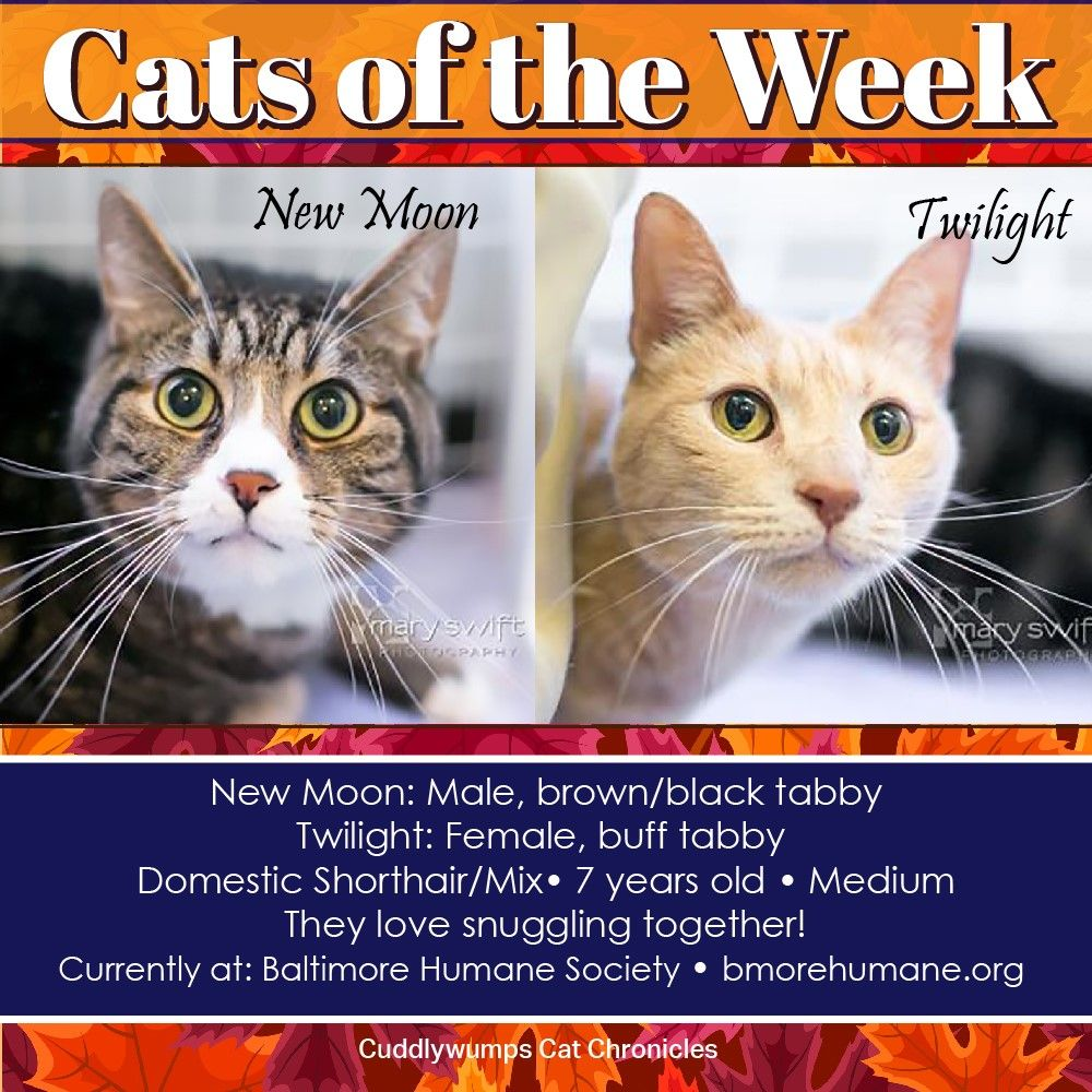 Cats of the Week New Moon and Twilight in Baltimore New