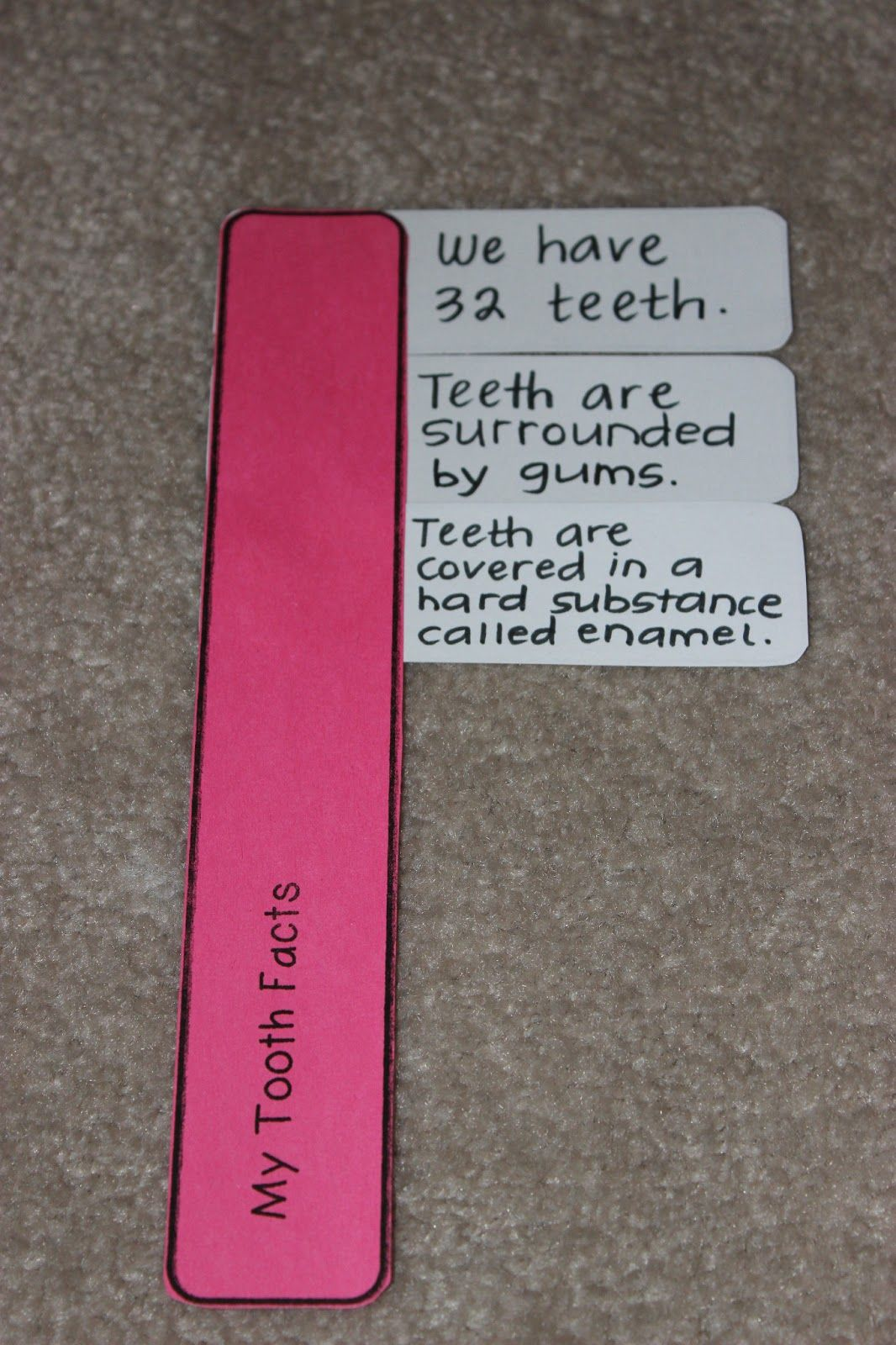 Teach Dream Inspire Toothbrush Facts About Teeth