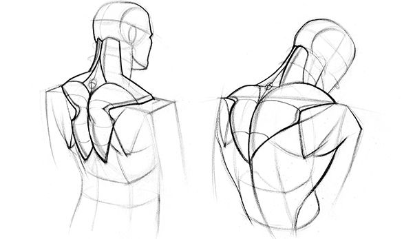 How To Draw Upper Back Muscles Form Anatomy Sketches Human Anatomy Drawing Figure Drawing
