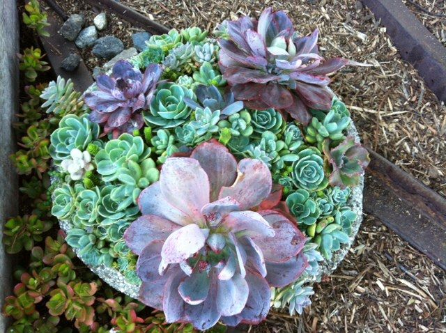 Went to Big Sur and the place we stayed had the most beautiful succulent garden.