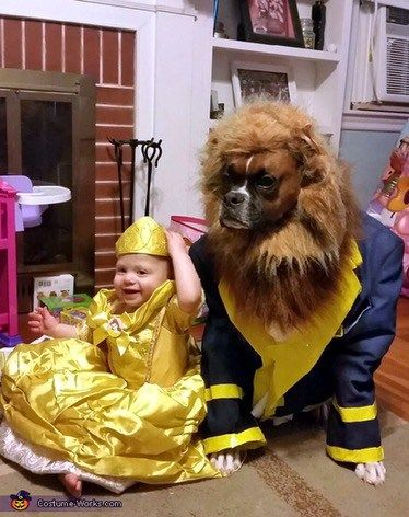 Beauty and the best, dog halloween costume, Belle