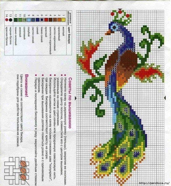 Peacock | cross stitch | Pinterest | Punto de cruz, Puntos y Arte de ...