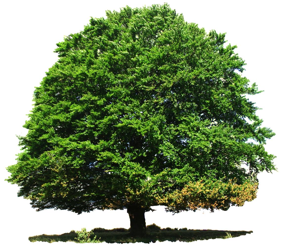 Tree Png Image Trees Top View Tree Photoshop English Oak Tree