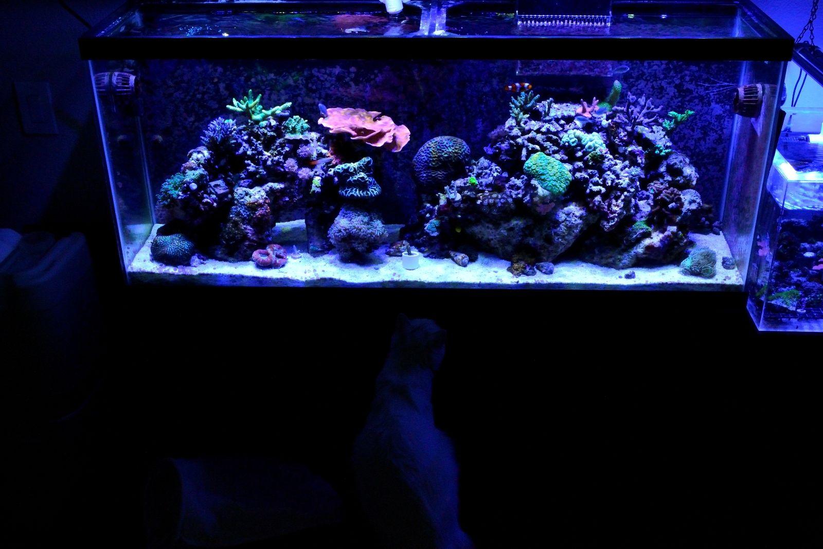 Need 55 Gallon Reef Setup Feedback And Help 55 Gallon Saltwater Tank Saltwater Aquarium