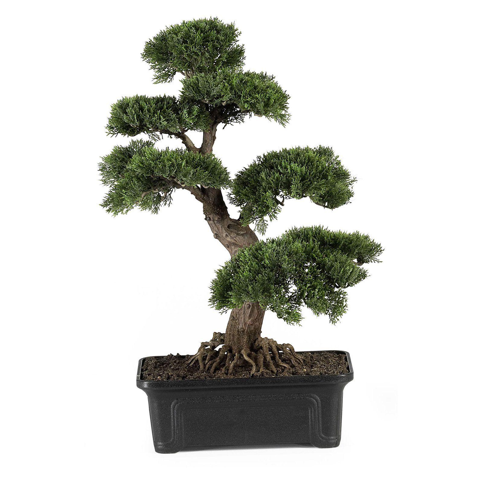 24 In Cedar Bonsai Silk Tree Silk Plants Cedar Plant Plants