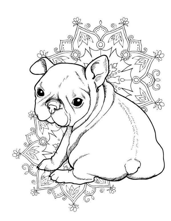 Pin by Dianna Dupont on Coloring | Bulldog cachorro, Bulldog frances ...