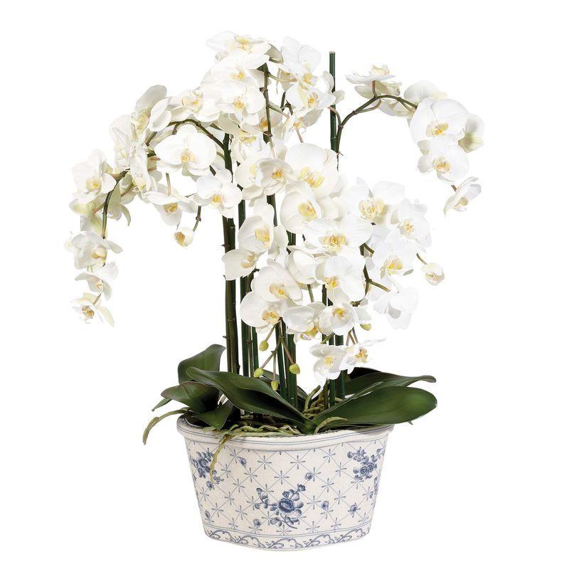 Phalaenopsis in Ceramic Pot