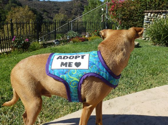 Cute Pet Vest With Important Message Adopt Me Dog Vest Can Also