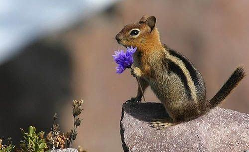 romantic squirrel