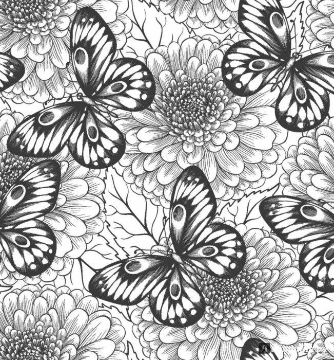 Pin de todo llega en mariposas | Pinterest | Mariposas