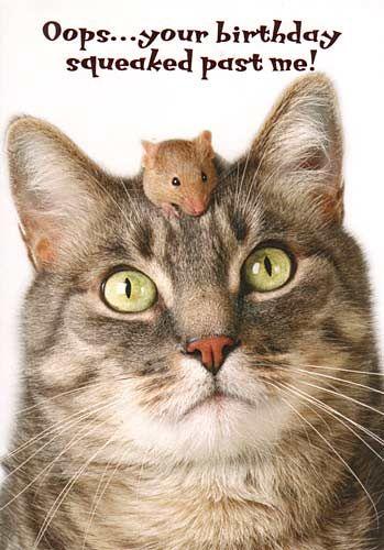 Happy Belated Birthday Cat : happy, belated, birthday, Belated, Birthday, Wishes,, Card,