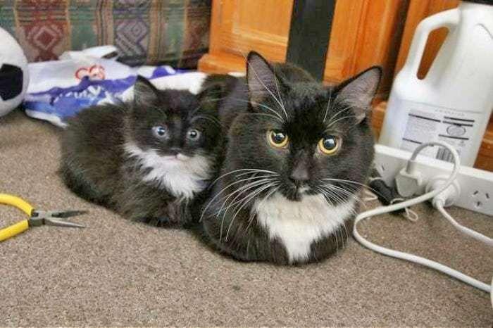 Gatos, Humor Divertido Sobre Animales Y Gatos Bonitos