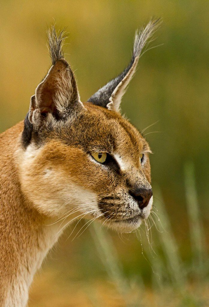 Pin on WIld Animals