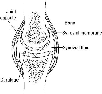 A Healthy Synovial Joint Vit D And Ra To Your Health Pinterest
