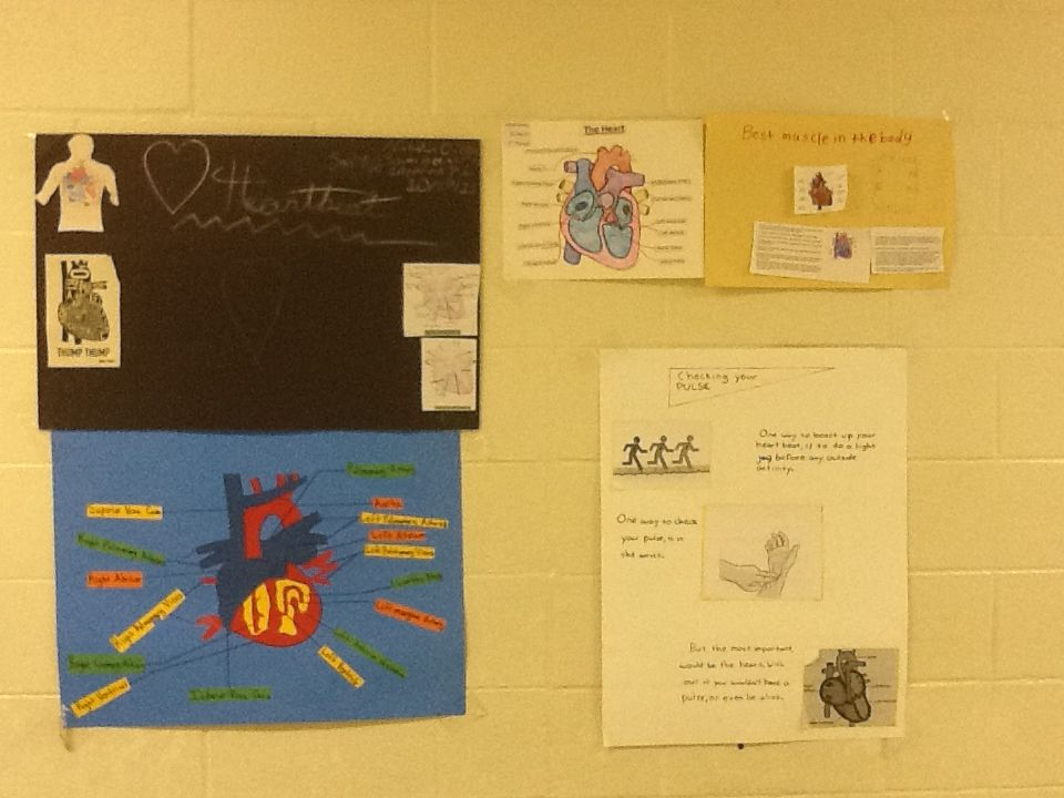 Heart Function Posters! #DISDHPE #DallasISD