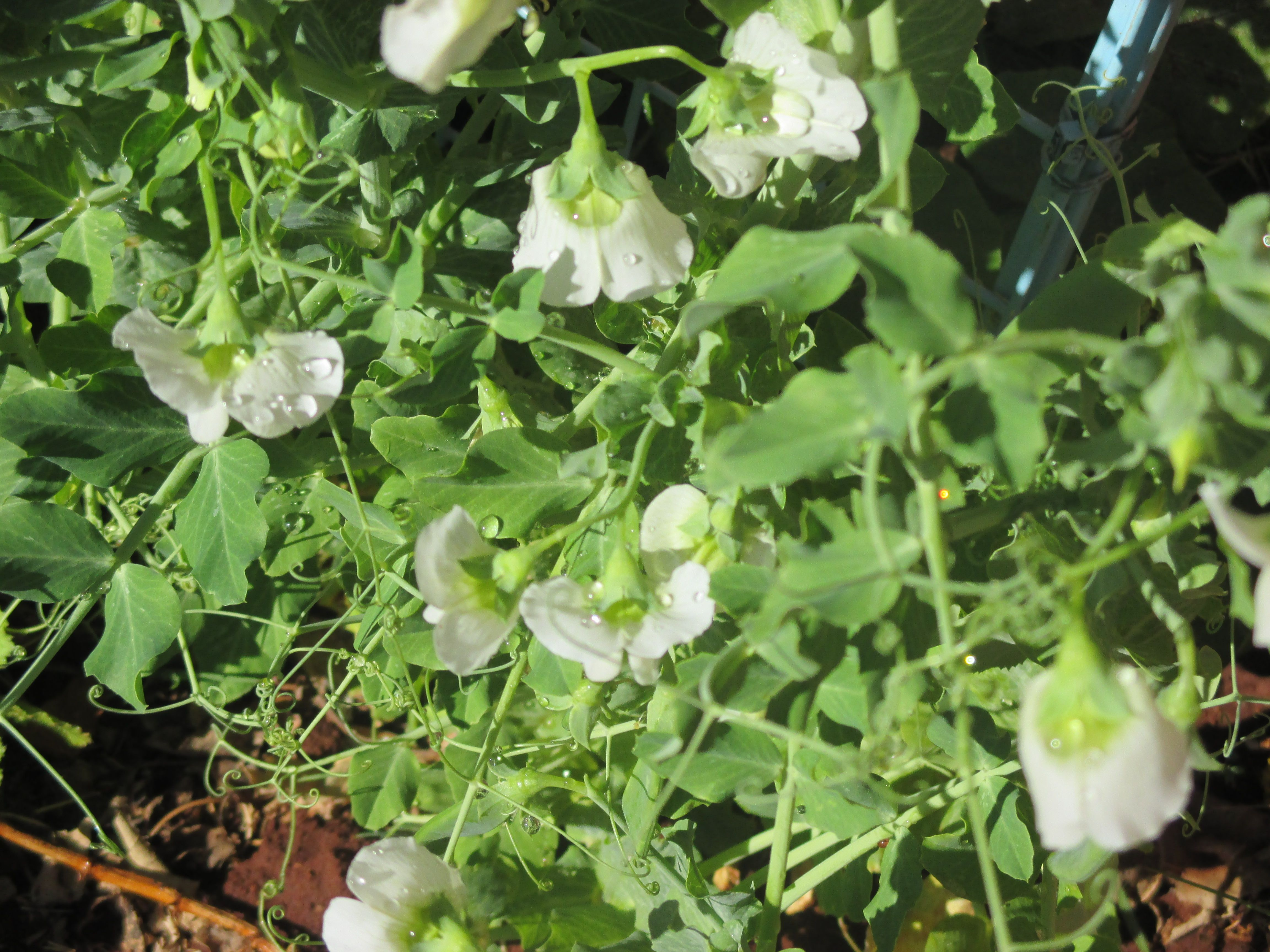 Abundant Blooms: All the love and care makes little flowers grow