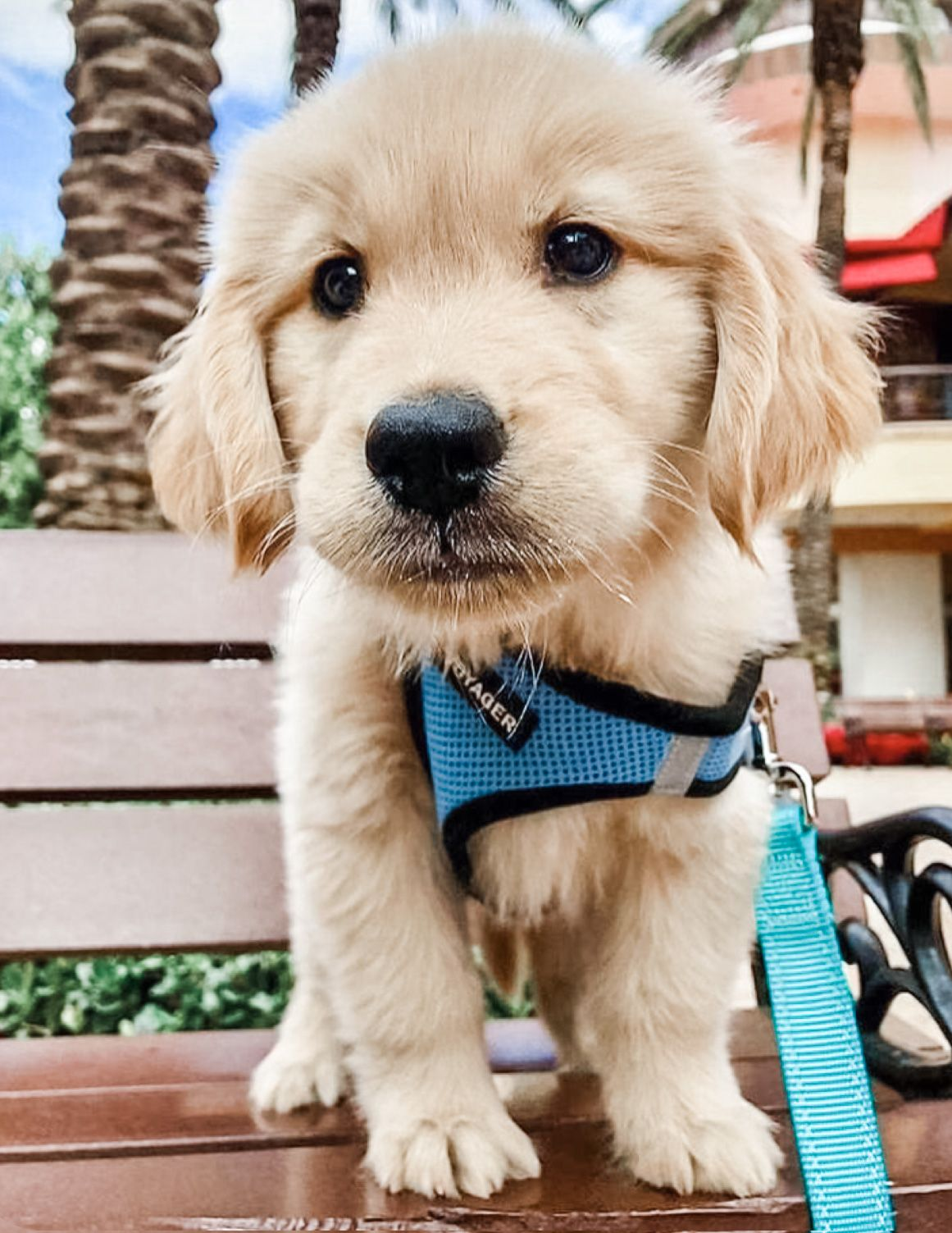 26 Teeny Tiny Puppies Guaranteed To Make You Say Awww Cute Animals Cute Animal Pictures Cute Dogs