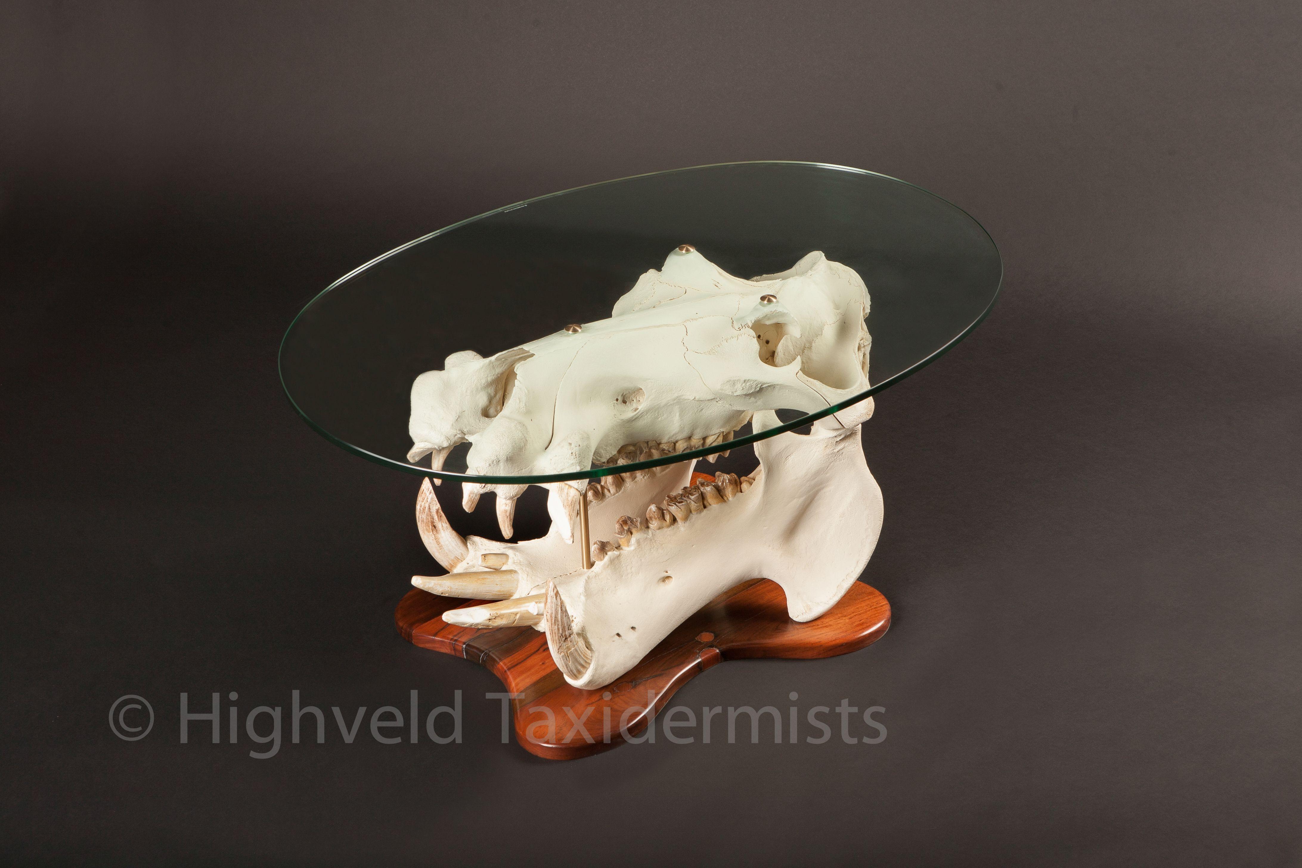 Hippo Skull Coffee Table Highveldtaxidermists Skullart Taxidermyart Taxidermy Taxidermy Art Taxidermist Taxidermy [ 2912 x 4368 Pixel ]