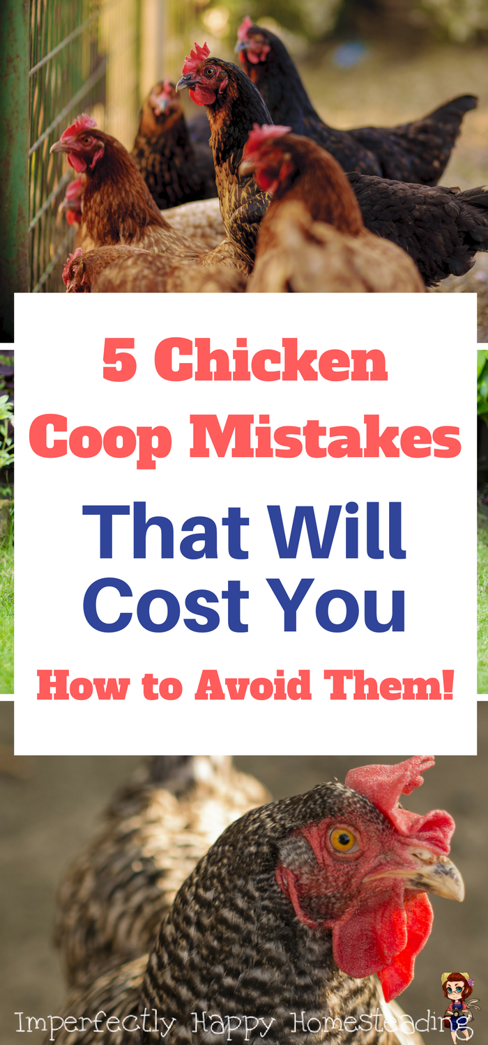 5 chicken coop mistakes that will cost you u0026 how to avoid them
