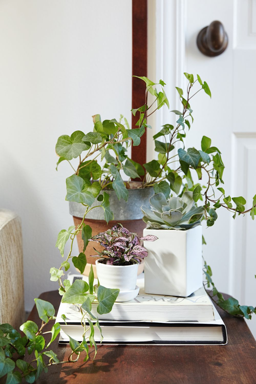 Ivy, succulent, and leafy low light plant