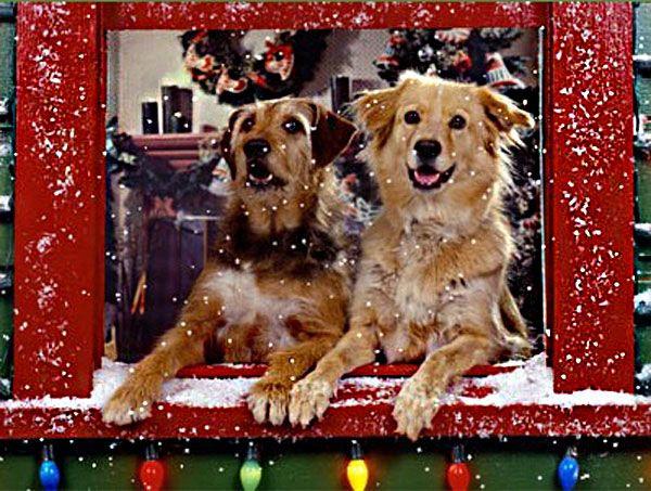 Free Animated Christmas Wallpaper Animated Christmas Wallpaper Christmas Desktop Wallpaper Animated Christmas Free christmas wallpaper with dogs