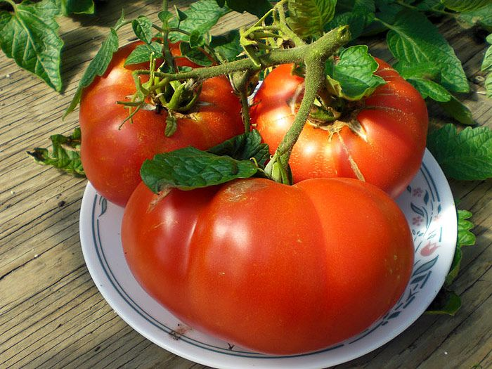 Top 10 Heirloom Tomatoes for the Garden #tomatoes #heirloomtomatoes #gardening #growingtomatoes #growingvegetables #gardeningtips