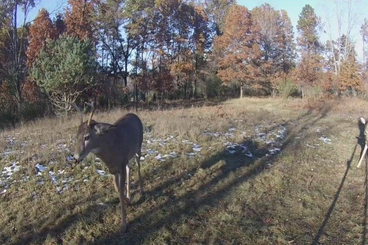 Hook & Hunting Report: Hunting on Black Friday - Northern