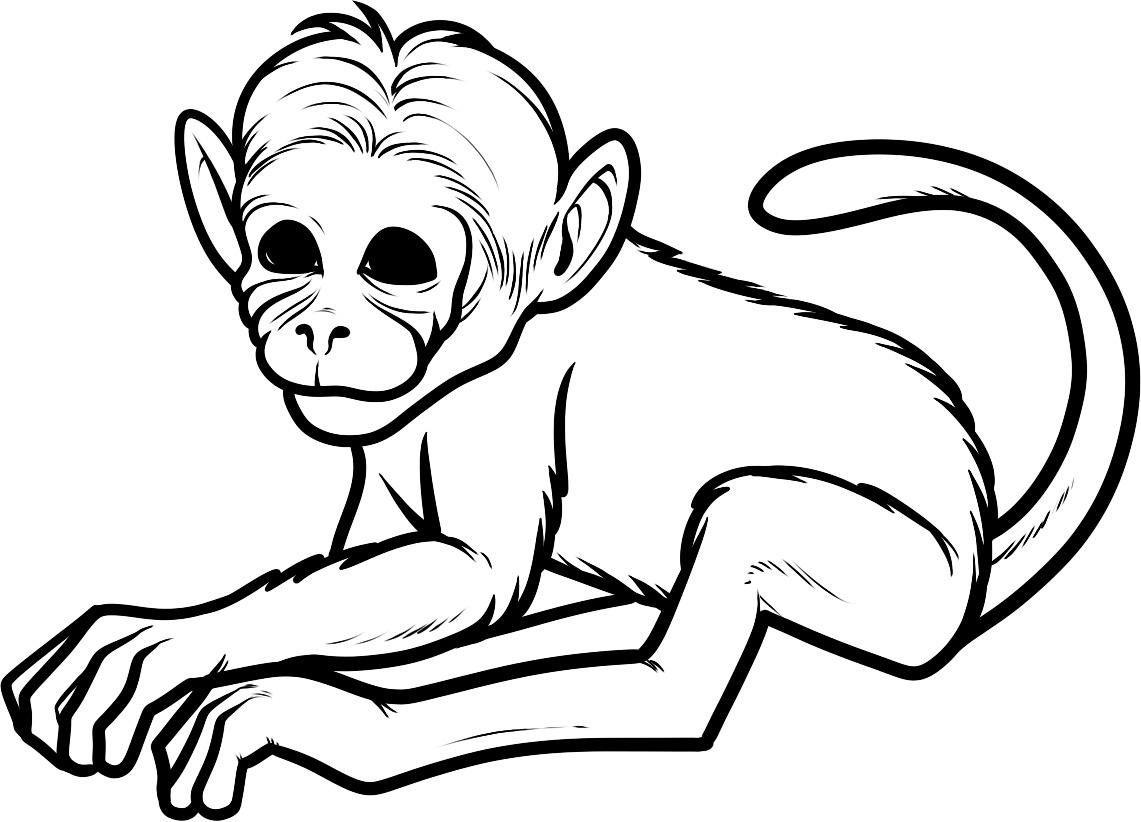 Free Printable Monkey Coloring Pages For Kids Halaman Mewarnai