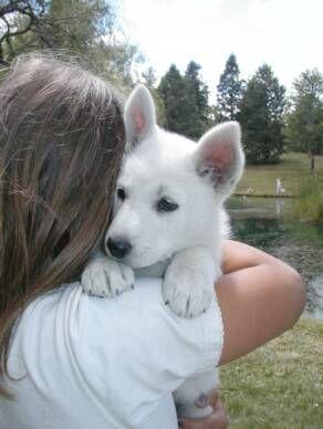 Haleyblevinsss Mit Bildern Ausgestopftes Tier Hunde Und