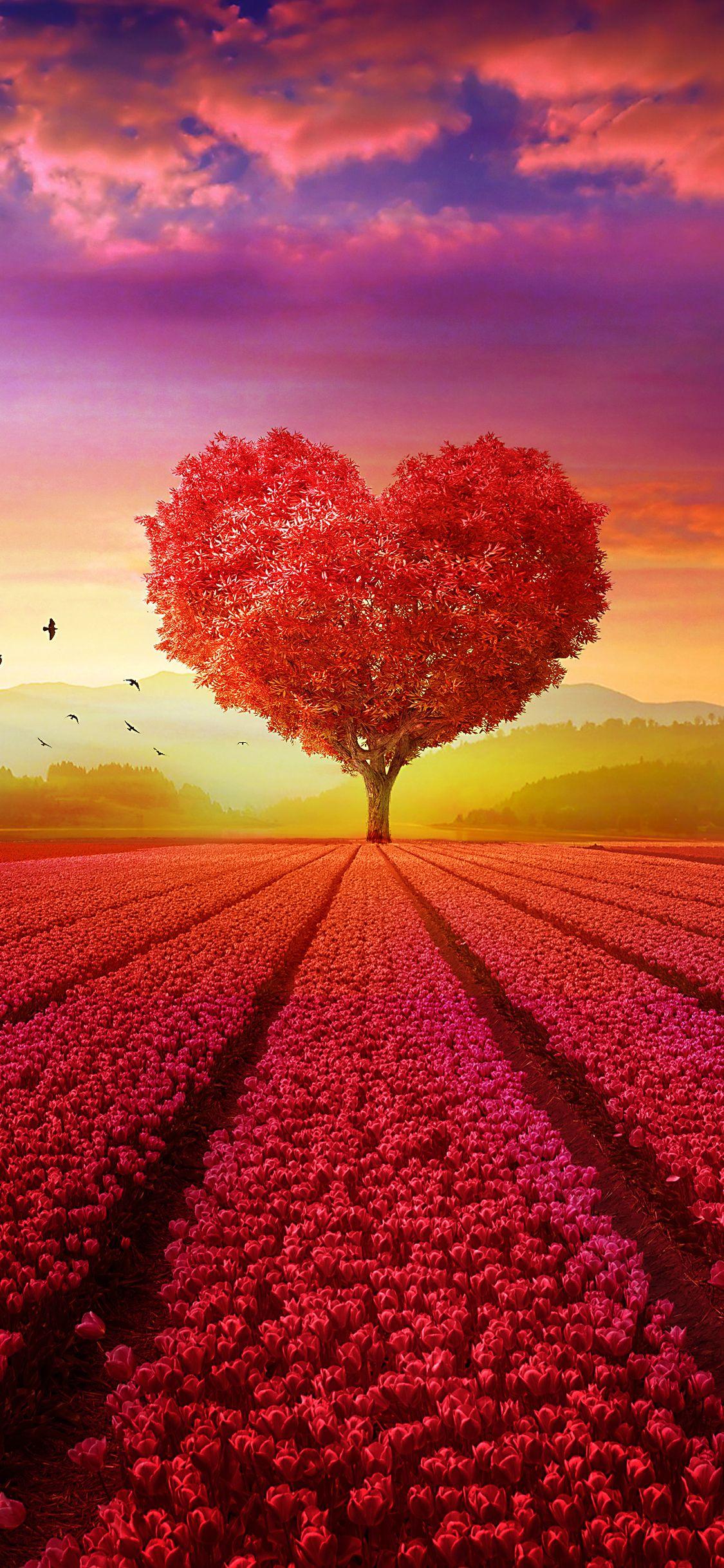 Desktophdwallpaper Org Beautiful Landscape Wallpaper Tree Wallpaper Backgrounds Tree Wallpaper Iphone