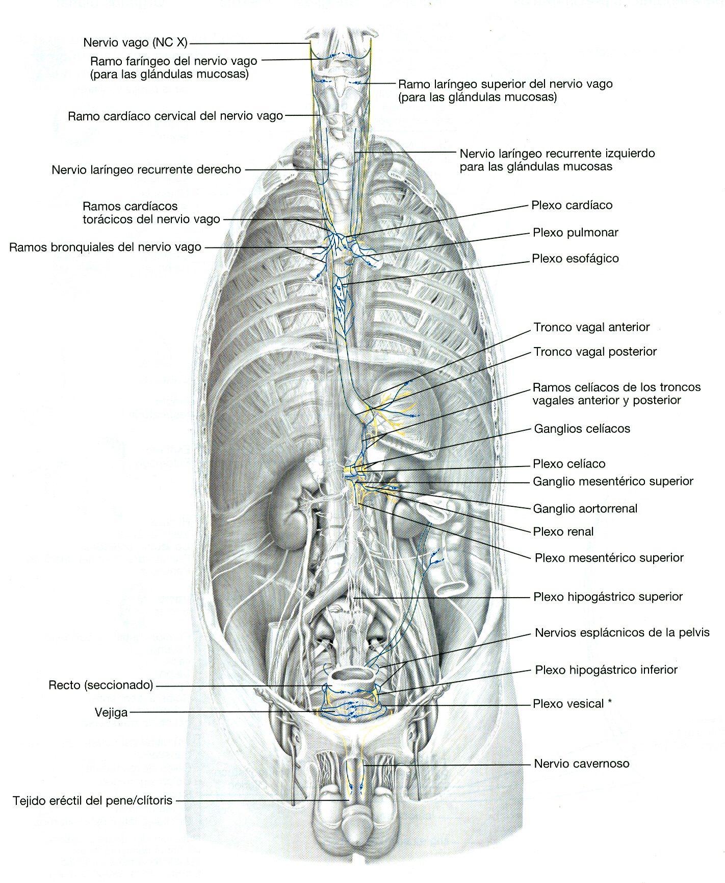 Lippincott Williams & Wilkins atlas de anatomía http://kmelot ...