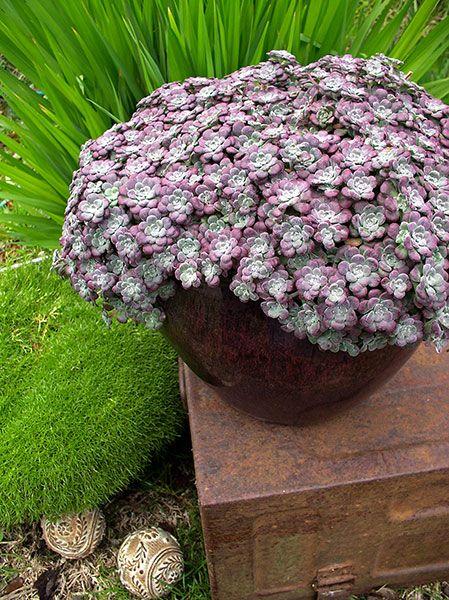 16+ Purple blob ideas