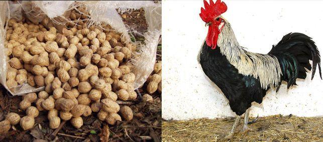 El cacau de collaret o la gallina valenciana de Chulilla son productos autóctonos valencianos incluidos en los programas de protección de Slow Food.