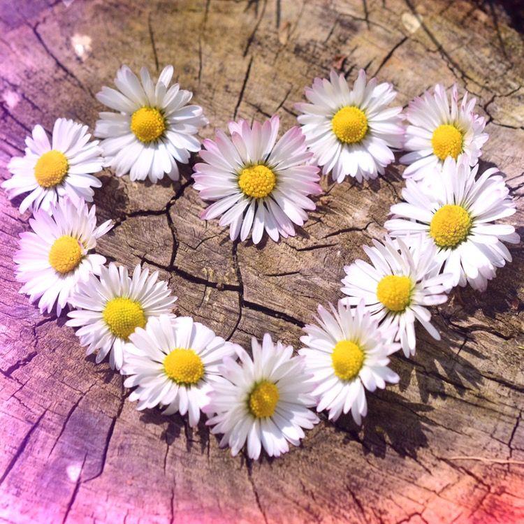 #LUVIT 😍 Always spread the LUV! 🌼🌷🌻🌹🌸 #sunday #sundayvibes #sundayfunday #catears #floralcatears #catearsheadband #kittyears #ledflowercrown #flowerheadband #flowerheadbands #flowerhalo #flowercrown #flowercrowns #flowerchildren #flowerchild #ravewear #ravecostume #festivalfashion #mouseears #disneyears #minniemouseears #mickeymouseears #disneybound #disneybounding #disneycostume #unicorn #unicorns #unicorngirl #unicornheadband